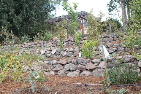 Garden yields fresh herbs