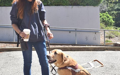 Golden retriever Oscar helps psychology major Michelle Yoo as her guide due to Yoo's partial blindness. Yoo requested a service dog at the Disabled Students' Programs and Services Office on campus.